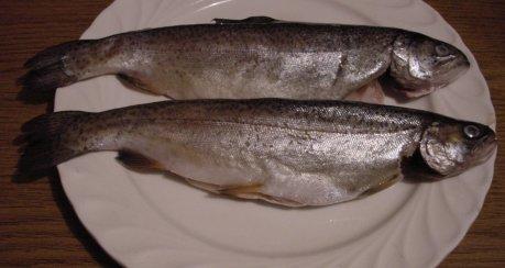 Kräuter Forellen in Sahne-Sauce