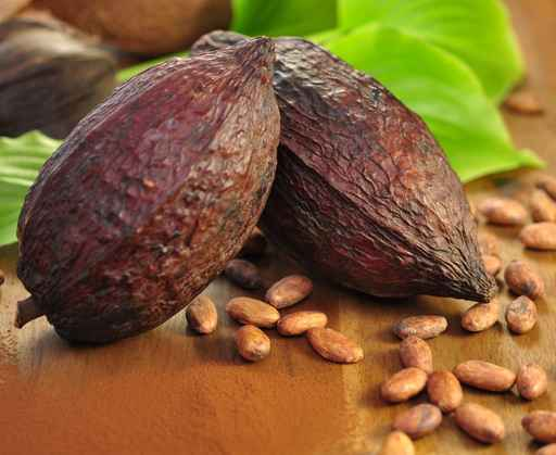 Früchte des Kakaobäumes