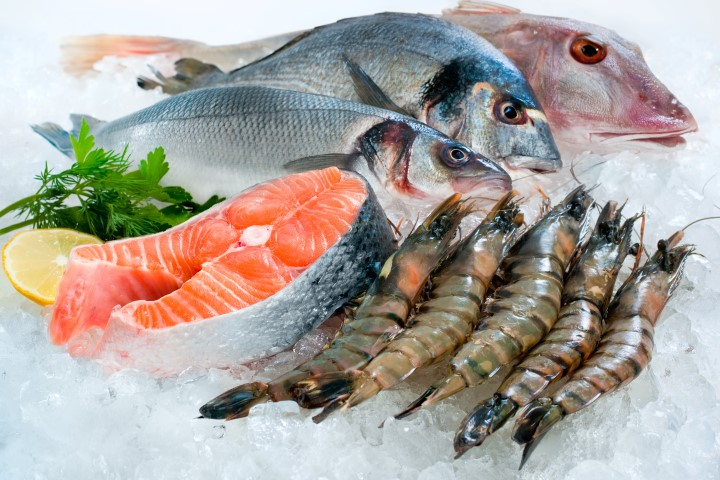 Fisch Videos