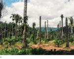 Wie schädlich ist Palmöl? Gute Gründe für den Bio-Anbau