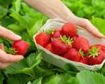 Beeren-Zeit: Sommerliche Rezeptideen für süße Früchtchen