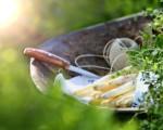 Sauce Hollandaise: Nicht nur mit Spargel ein Genuss